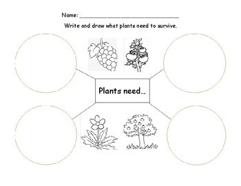 What Plants Need Bilingual english and spanish bubble map