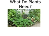 What Plants and Animals Need to Survive