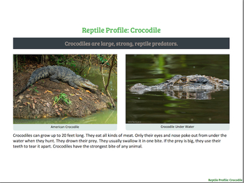 What Reptiles are Like in a Rainforest Habitat (PDF)
