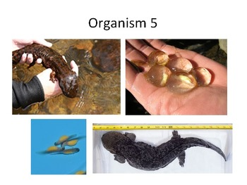 Classifying Organisms : Dichotomous Key Power Point