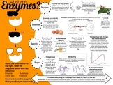 Enzymes Laboratory Activity
