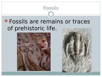 What are Fossils?