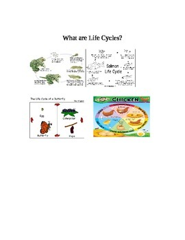 What are Life Cycles?