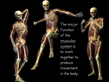 What are Organs and Body Systems PowerPoint and Interactive Student Notes