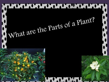 What are the Parts of A Plant? Powerpoint