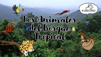 What are the animals of the rainforest doing? (Presentation with Q&A)