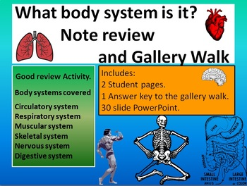 What body system is it review and gallery riddle walk