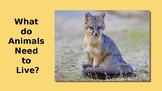 What do Animals Need to Live? Kindergarten Science NGSS K-LS1-1  PowerPoint