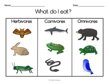 Herbivores and Carnivores Lesson Plans   Worksheets additionally  likewise  also Life of a Herbivore – Free Science Printable for 4th Grade besides 4th carnivores herbivores omnivores besides paring Herbivores  Carnivores and Omnivores   Clroom Secrets in addition Is That Mammal a Carnivore  Herbivore or Omnivore additionally  as well worksheets  Dinosaurs Omnivore Carnivore Herbivore Sorting Activity additionally  together with  moreover Carnivore  Omnivore  Herbivore sorting Smartboard file by GamGam furthermore Dinosaur Web Quest Herbivore Carnivore Omnivore Worksheet Free further Herbivore Carnivore Omnivore Worksheet as well  also Carnivore Omnivore and Herbivore Venn Diagram Worksheet   venn. on worksheet on herbivores carnivores omnivores