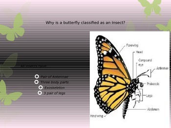 Insects- What do you know about butterflies?