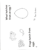 What hatches from an egg?- a non-fiction guided reading book