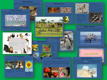 What is Adaptation? Plant and Animal Adaptations Lesson and ISN Student Notes