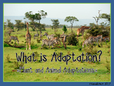 What is Adaptation? Plant and Animal Adaptations Lesson an