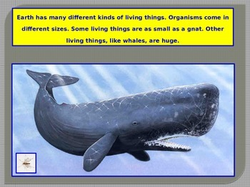 What is An Organism