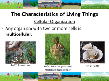 What is Life? Powerpoint Slide Show