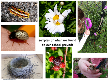 What is Nature?  Reading, Nature Walk, and STEAM Challenge