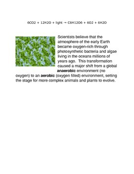 What is Photosynthesis? An Introduction Common Core Activities