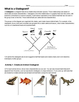 What is a Cladogram (KEY)