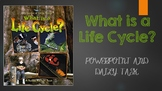 What is a Life Cycle? Second Read! Powerpoint and Daily Task