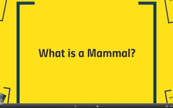 What is a Mammal? PREZI