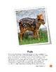 Forest Animals Pudu