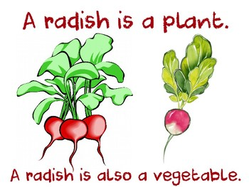 What is a Radish?