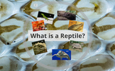 What is a Reptile? PREZI