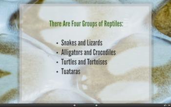 What is a Reptile? PREZI