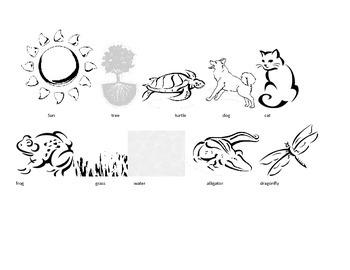 What is a Wetland Habitat?