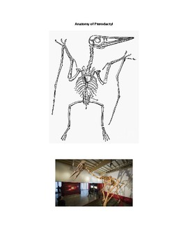 What is a pterodactyl? MS-LS4 comparative anatomy