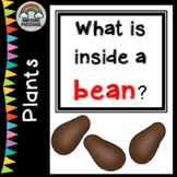 What is inside a bean? - a Science Experiment - Planting/Gardening Unit/Study