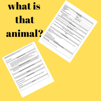 What is that animal?
