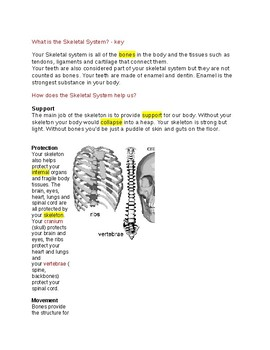 What is the Skeletal System? --  CLOZE Reading
