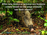 What new device/process can be created based on ways anima