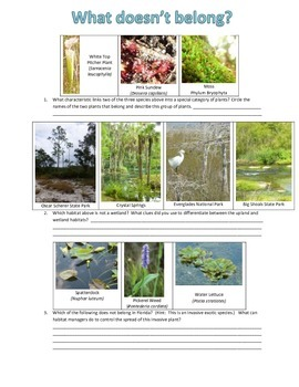 What picture does not belong in a wetland system?
