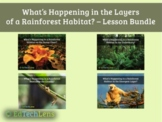 What's Happening in the Layers of a Rainforest Habitat? -