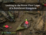 Looking in the Forest Floor Layer of a Rainforest Ecosyste