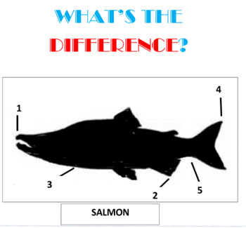 What's the Difference? -- 8