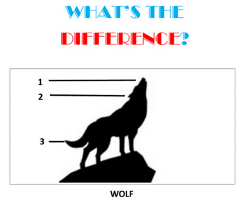 What's the Difference -- Set 1