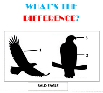 What's the Difference/ -- Set 10