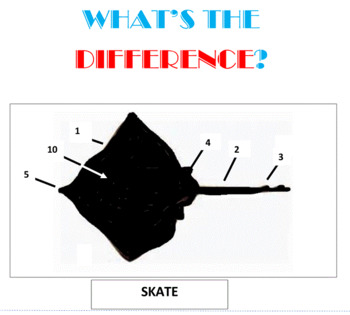 What's the Difference/ -- Set 12