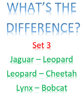 What's the Difference? -- Set 3