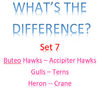 What's the Difference -- Set 7