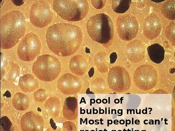 What's under the microscope fun quiz