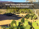 What traits help plants survive in dry environments?