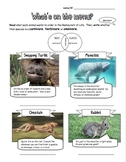What's on the Menu?  Carnivores, Herbivores and Omnivores
