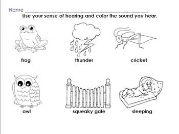 Five Senses: What's that Sound? (Hearing)
