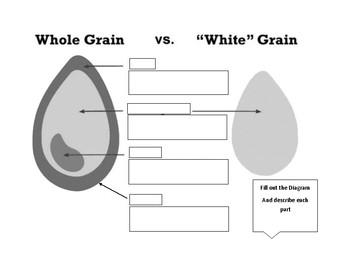 Wheat Diagram/Handout