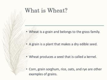 Wheat Lesson