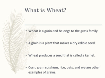 Wheat Lesson